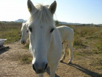 Spirit - Männlich Pferd (5 Jahre)